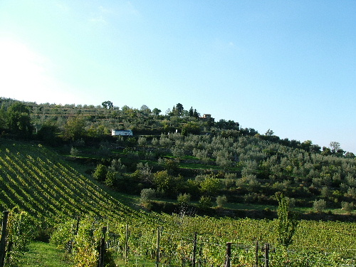 Greve in Chianti countryside